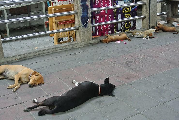 歩道で寝る犬たち